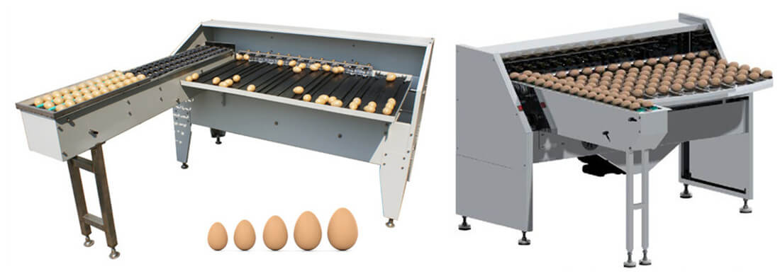 Automatic egg classifying machine for grading chicken duck eggs