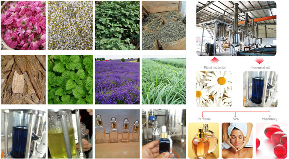 Plants can be Extracted for getting essential oil