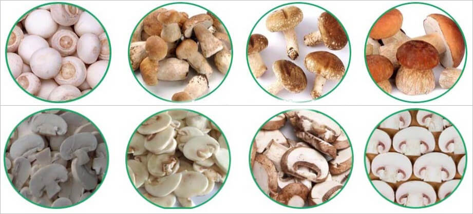 electric mushroom slicer application