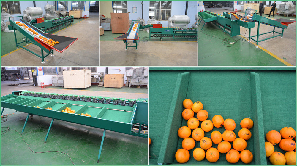 how does fruit vegetable grading machine work