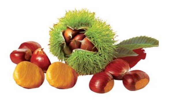 vhow to choose good chestnuts