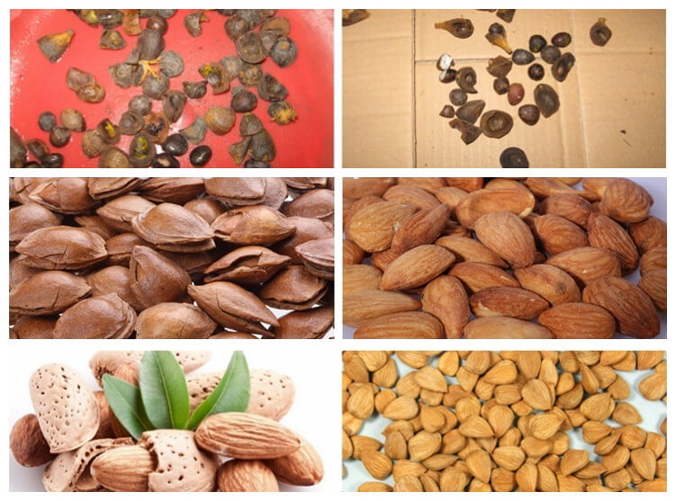 palm nut shelling machine application for cracking almond, palm nut, etc