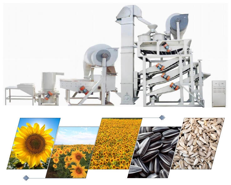 sunflower seeds shelling machine line